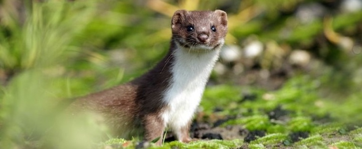 11 Weasel Words to Avoid in Conversation at All Costs.jpg